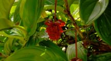 Tropical Jungle Plants In Hawaii, Red Flower
