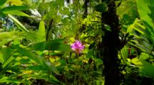 Tropical Jungle Plants In Hawaii, Colorful Orchid