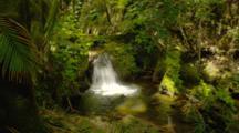 Small Waterfall In Jungle Near Hilo