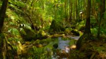 Stream In Topical Forest