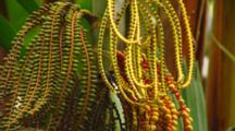 Tropical Jungle Plants In Hawaii