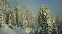 Snow Covered Fir Trees In Deep Shadow On Mt Ashland, Oregon