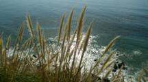 Overlooking Big Sur Coast Behind Pampas Grass