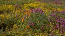 Medium Shot Wildflower Field