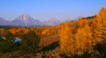 Mountains Including Mt. Moran And Vivid Fall Colors