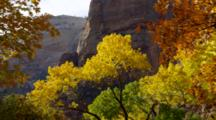 Autumn Trees And Red Rock Landscapes At Zion
