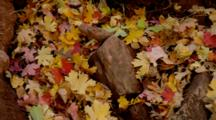 Close Up Accumulated Autumn Leaves On Forest Floor