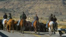 Cowboys Drive Cattle On Highway In Eastern Oregon