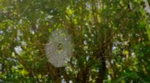 Spider Web In Tropical Forest Shines With Sunlight