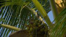 Birds In Coconut Palm Tree
