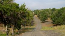 Macadamia Grove Near South Point Hawaii