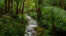 Tropical Forest And Stream Near Hilo
