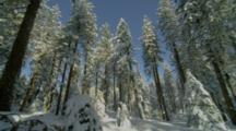 Snow Covered Forest, Mt Ashland, Oregon