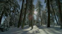 Sun Shines Through Snow Covered Forest, Mt Ashland, Oregon