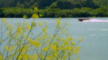 Boating At The Rogue River Bridge, Through Shoreline Foliage, Gold Beach, Oregon