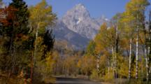 View Down Road Lined With Fall Trees, Teton Mountain Ahead, Near Moose Junction