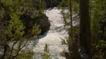 View Of Rushing River Between Forest Trees, Yellowstone