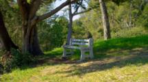 Lone Park Bench In Park