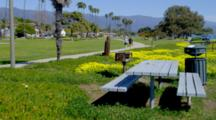 People Walk On Path By Bench And Yellow Flowers In Shoreline Park, Santa Barbara