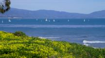 Sailboats And Coastline Beyond Yellow Flowers, From Shoreline Park, Santa Barbara