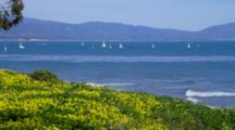 Sailboats And Coastline Beyond Yellow Flowers, From Shoreline Park, Santa Barbara