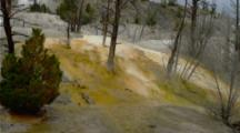 Colorful Mineral Deposits, Dead Trees Of Mammoth Hot Springs
