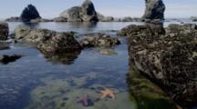 Sea Stars In Intertidal Among Rocks, View Through Surface