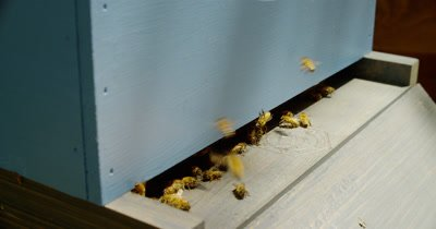 Close Up Active Backyard Beehive