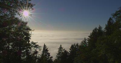 Evening Fog Below Trees,Redwood National Park