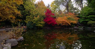 Fall Trees And Bench Reflected in Pond In Lithia Park,Ashland,OR