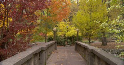 Footbridge In Lithia Park With Fall Colors