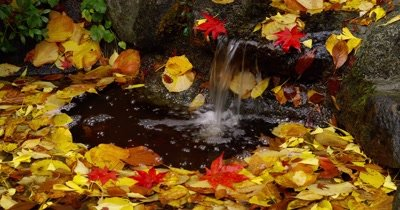 Edited Compilation: Autumn Stream In Deciduous Forest