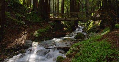 Walking Bridge over Rocky Stream,Creek in Forest