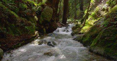 Rocky Stream,Creek in Forest