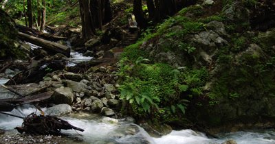 Rocky Stream in Forest