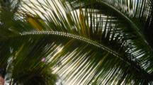 Sunlight Shines Through Fronds Of Palm Tree