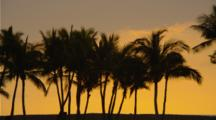 Line Of Palm Trees Silhouetted By Golden Sunset