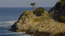 Single Cypress Tree On Cliff Above Coast
