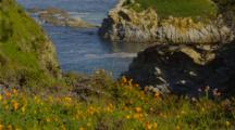 California Poppies Above Point Lobos