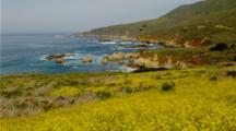 Field Of Yellow Flowers Above Garrapata Beach, Carmel