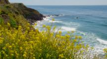 Overlook View Of Big Sur Coast With Yellow Flowers (Mustard?) In Foreground