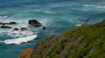 California Condors On Coastal  Cliff