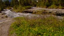 Wildflowers, Possibly Glacier Lilies, Next To Creek