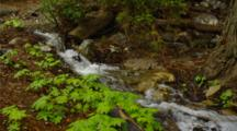 Pan Down Forest Stream At Julia Pfeiffer Burns State Park
