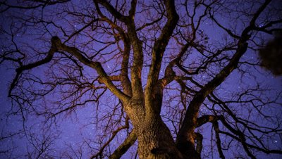Time lapse of the stars behind a bare oak tree in Ashland, Oregon