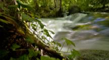 Time Lapse, Track Over Stream and Ferns In Lithia Park, Ashland, Oregon