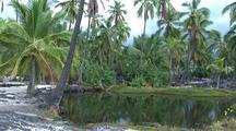 Palm Trees And Lagoon Big Island Coast