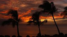 Sunset And Dramatic Clouds Silhouette Palm Trees