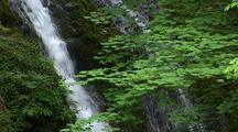 Forest Waterfall In Olympic National Park