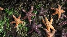 Intertidal Habitat Stock Footage